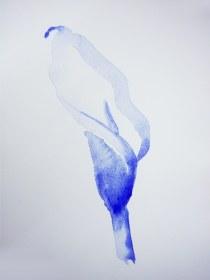 calla lily, blue