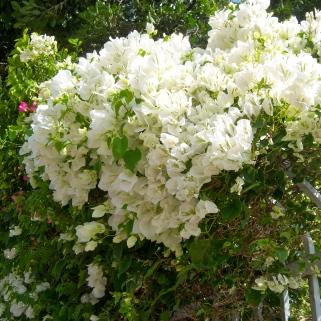 Gate flowers